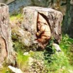 <森の小人>標高1800メートルのアルプスの山でドンジャラホイ
