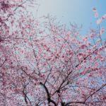 東京都内のおすすめ花見スポット!手ぶらBBQ×花見×自然×海×トイレ充実=葛西臨海公園お花見ガイド【2019年版】